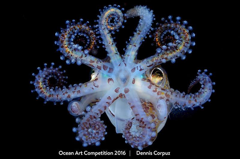 content-1484134137-ocean3